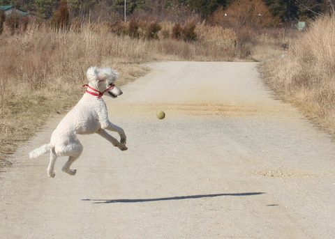 Holly can jump!